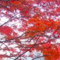 スクリーンショット 2015-11-24 8.01.20