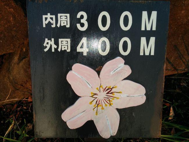 020_mejirushi5