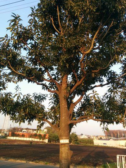 031_tree