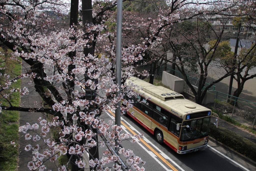 008_sakura