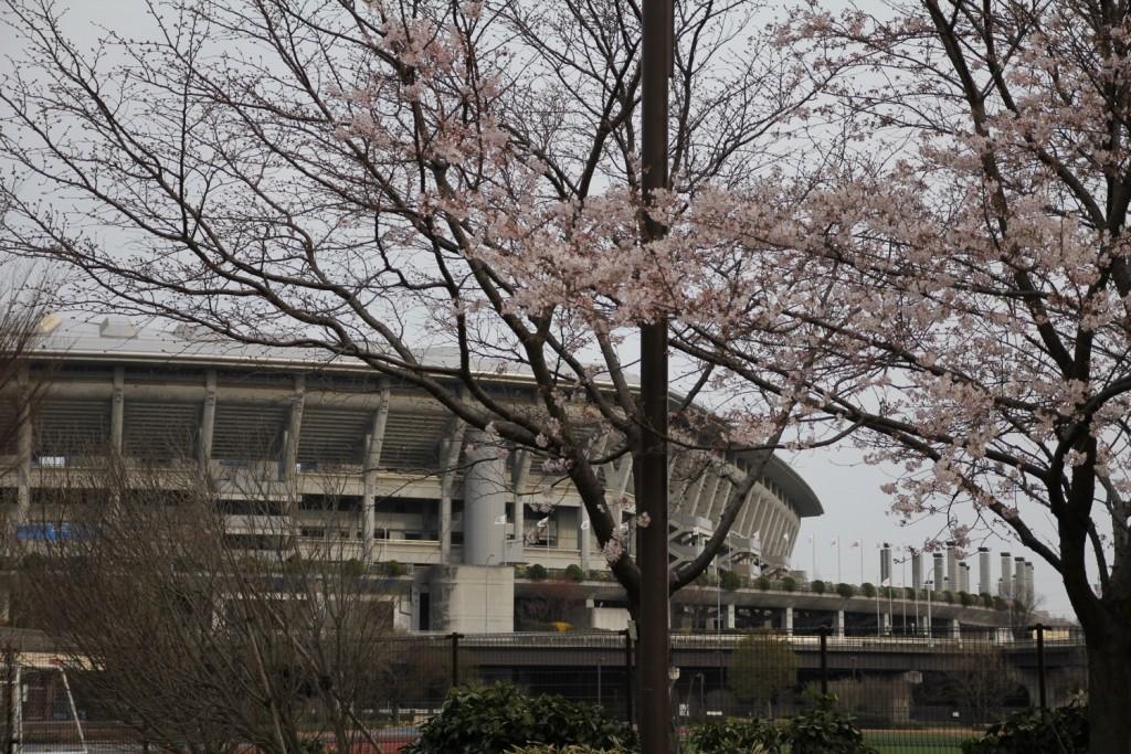 001_sakura