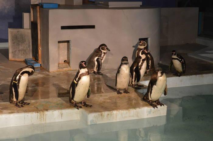 003_penguin