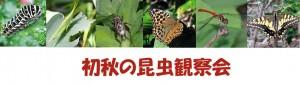 初秋の昆虫