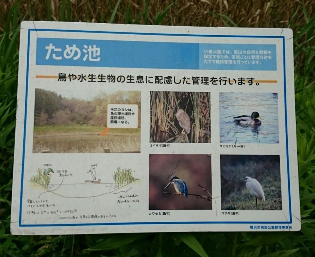 kosuzume6