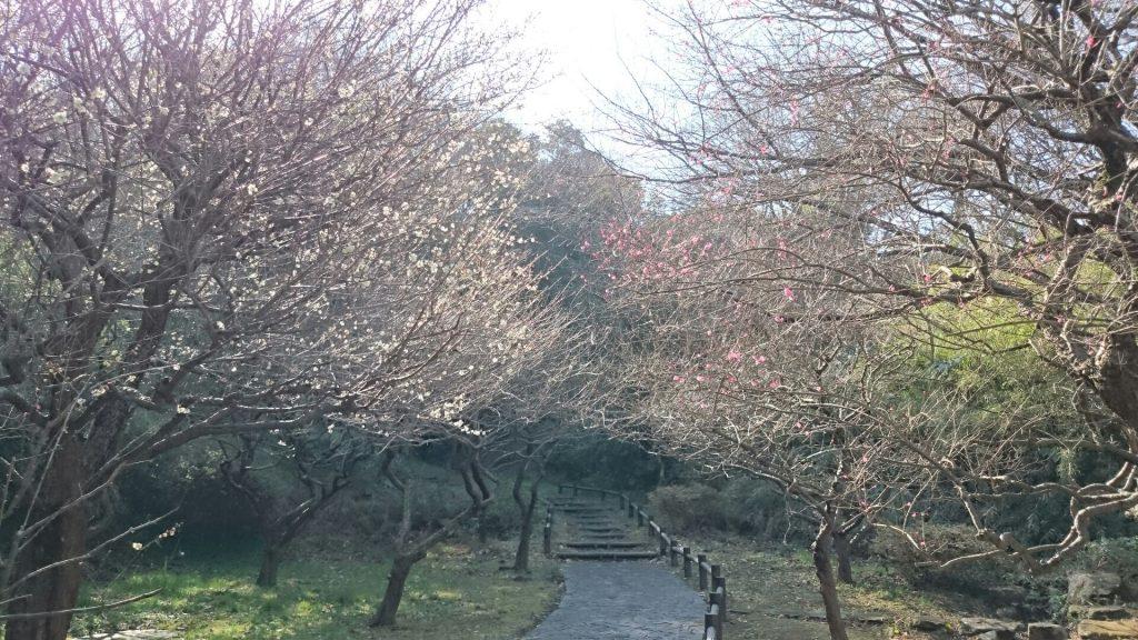 okamura5