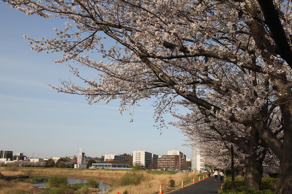 07_shinyoko