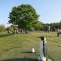 横浜市内、広い公園ベスト25!連休の行楽に。行けば絶対楽しめる、魅力ある公園ばかりです。