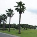 県立辻堂海浜公園:広い芝生の広場、電車運転体験に、芝滑り! 海でも遊べる公園は1日楽しめます [藤沢市]