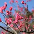 横浜、梅の名所6選。子供とお散歩で梅を見にいくならこの6箇所 [2019年最新版]