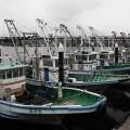 柴漁港:横浜の漁港で漁船見学と新鮮アナゴ丼。子連れで行ける[金沢区]