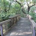 神の木公園:豊かな自然と景色の公園。「大口」駅から行ってみました [神奈川区]