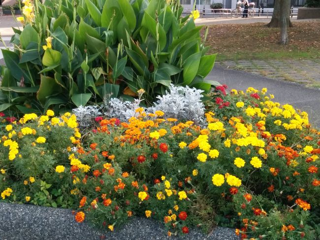 040_flower
