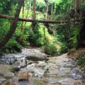 横浜の穴場! ここがすごかったベスト3 -秘境,自然編 2015-