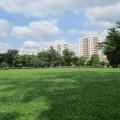 どこまでも芝生な、芝生の広い公園4選。[俣野公園・岸根公園・清水ヶ丘公園・根岸森林公園]