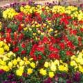 """中田中央公園:赤ちゃん目線のお花がイッパイ。冬でもお花を楽しめる""""お散歩公園"""" [泉区]"""