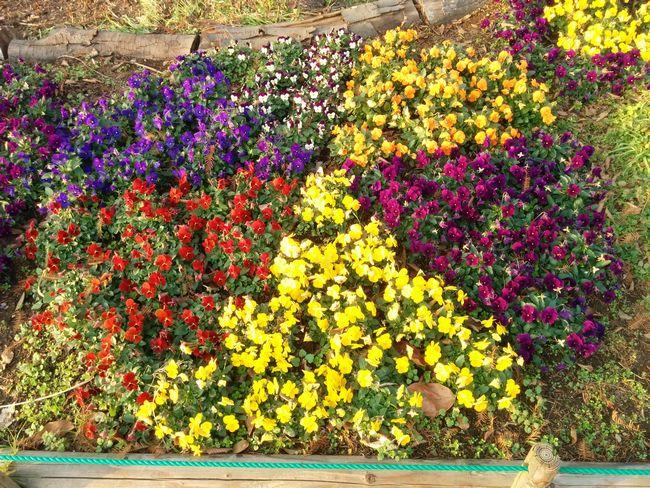 015_flower2