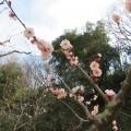 久良岐公園:自転車練習に最適。遊具、スポーツ、梅、桜。なんでもできる穴場公園。[磯子区・港南区]