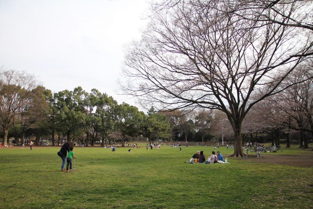 005_hanami