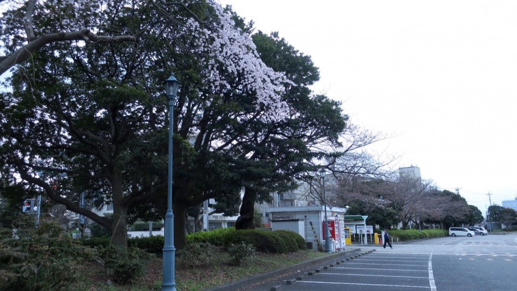 005_sakura