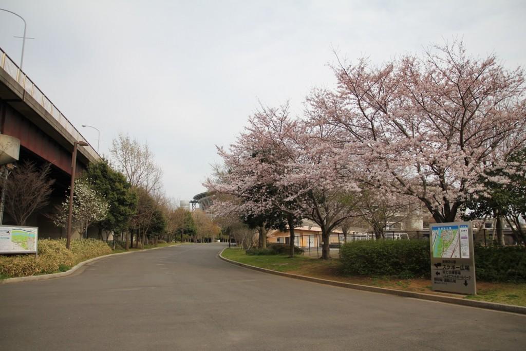 003_sakura