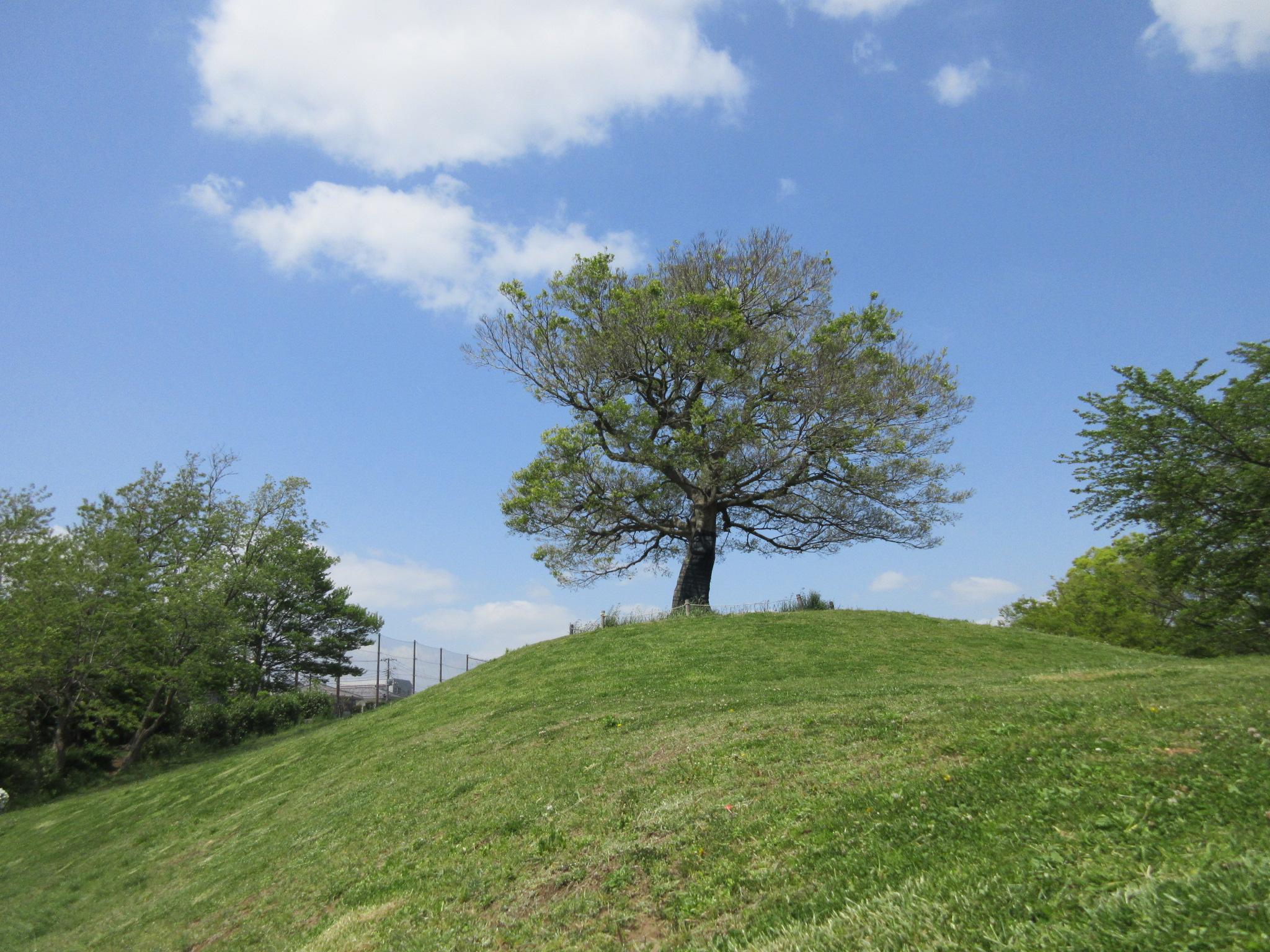 横浜にあるラピュタな公園 ベスト3 横浜でジブリなスポットを探せ
