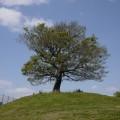 清水ヶ丘公園。「ゆずの木」が見守る丘の上の公園は、遊具にプール、電車スポットまで!子供と1日過ごせます。
