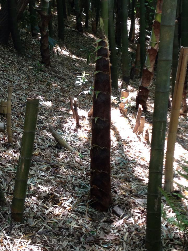 shiminnomori012