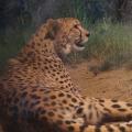 暑い夏は夜に遊ぼう!夜の動物園「ナイトズーラシア」開催