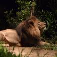 夜の動物園「ナイトズーラシア」今年も開催!イルミネーションや夜市も開催されます[8月]