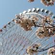 桜を子供と、子連れお花見。あそびい横浜、桜大特集2018!