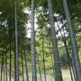 3~6歳のみ対象の希少イベント!遊んで発見、竹の世界をのぞいてみよう。親子で春の自然遊びが楽しめます。5/19開催、4/16予約受付開始[保土ヶ谷区・児童遊園地]