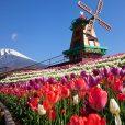20万本のチューリップが咲く「富士山の裾野 天空のチューリップ祭り2018」[4月21日から]