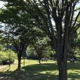 6/23にはホタル観賞会。東名高速青葉IC近くの北八朔公園でホタルが見られる![横浜市緑区]