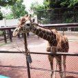 野毛山動物園:入場料無料なのに、人気の動物が間近に見れて、ふれあいもできる。公園感覚でお散歩に。[西区]