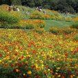 里山ガーデンフェスタ2018 秋:秋バージョンの大花壇を見に行こう!子供も楽しいワークショップやキッチンカーもあって1日楽しめます。[ズーラシア近く 旭区]