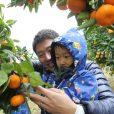 みかん狩りに行こう!冬の農業体験は、もぎたてのみかんをそのままパクっ。小さなお子さんにもおすすめの体験、みかん狩り募集中!【12月16日(日)@神奈川県大井町 受付中】