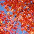 横浜の秋のお祭り ビッグイベント。子供と行く秋のイベントまとめ[2018年 各区別]