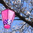 桜まつりを集めました。子供と季節を感じるおまつりに行こう[2019年横浜市内]