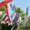 「鯉のぼり」を見に行こう!大空に伸び伸びと泳ぐ、湘南の鯉のぼりスポット&イベント5選:2019年度版 湘南