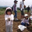 じゃがいも収穫にさつまいも植え付け体験。大井町農業体験第2弾、2019「いもまつり・夏」ピザ焼き体験も。家族みんなで一日楽しめます。[募集中!6月9日(日)@神奈川県大井町]