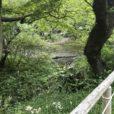 三渓園で「蛍の夕べ」開催中 今年はホタルの羽化が少し遅れています[5月17日〜26日]