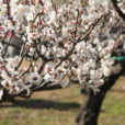 港北・大倉山観梅会が今年も開催!親子で満開の梅と屋台がいっぱいの園内を楽しもう[2月22日・23日、港北区]
