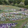 ズーラシア隣の「里山ガーデン」で春の大花壇公開!華やかな春の花を見ながらピクニック![フォトレポ 2021年4月9日]