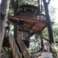 茅ヶ崎市市民の森:ツリーハウスやターザンロープがリニューアル!キッズ大興奮の森と共存したアスレチックなど、地元ママのおすすめポイントをご紹介します![茅ヶ崎市]